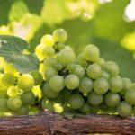в винограде какие витамины