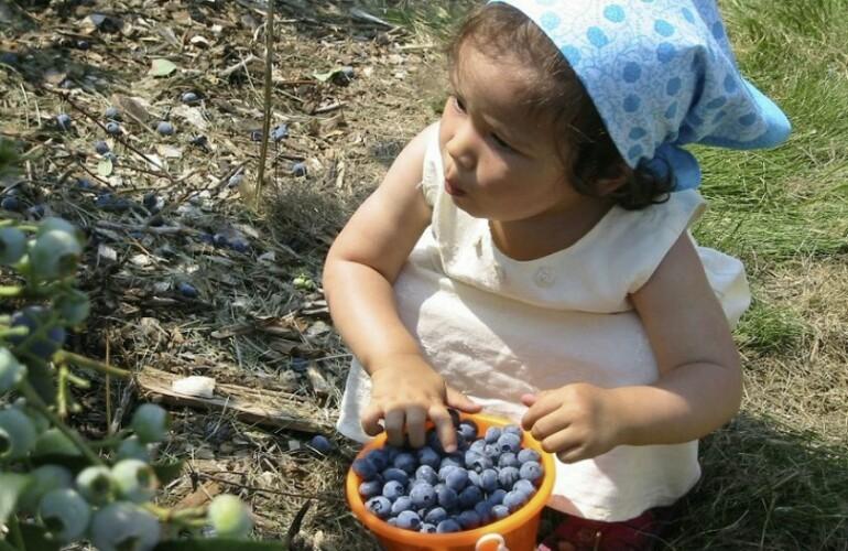 Ребёнок и ягоды